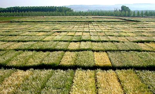 Pregon agropecuario nueva tecnolog a permitir a for Densidad de siembra de tilapia