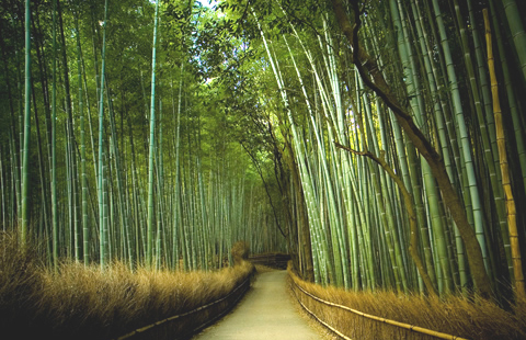 Pregon agropecuario el bambu alta expectativa y rapida respuesta cultivos industriales - Cultivo del bambu ...