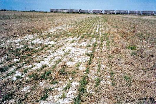 Resultado de imagen para salinidad agricultura